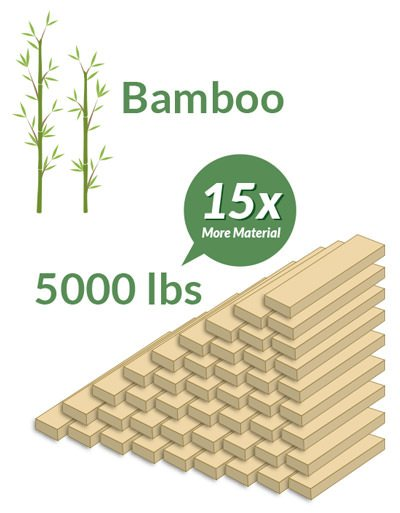 Growth_Rate_Bamboo | Dolphin Carpet & Tile