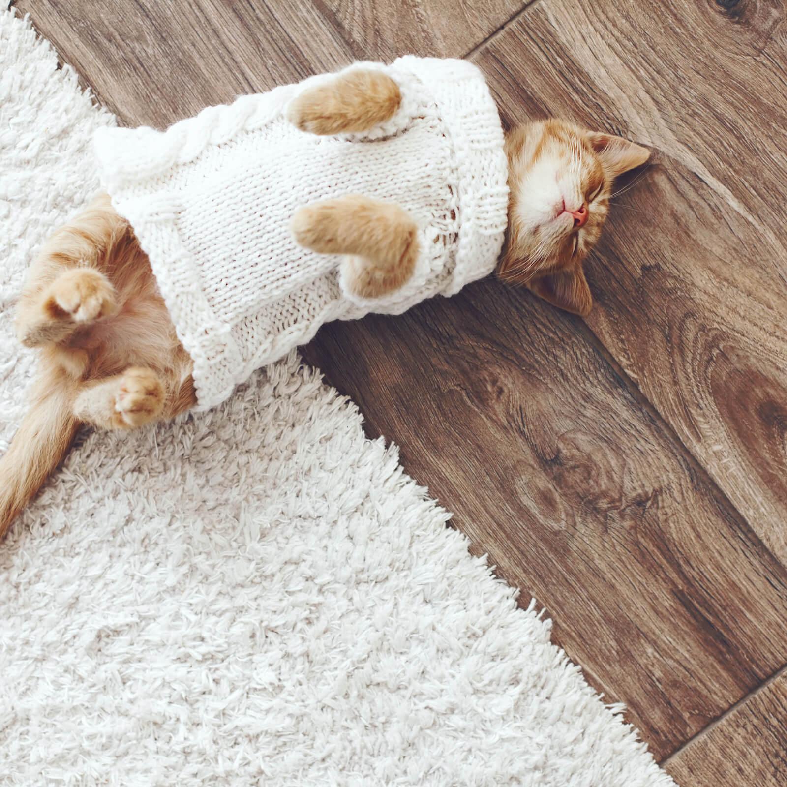 Cat on Hardwood | Dolphin Carpet & Tile