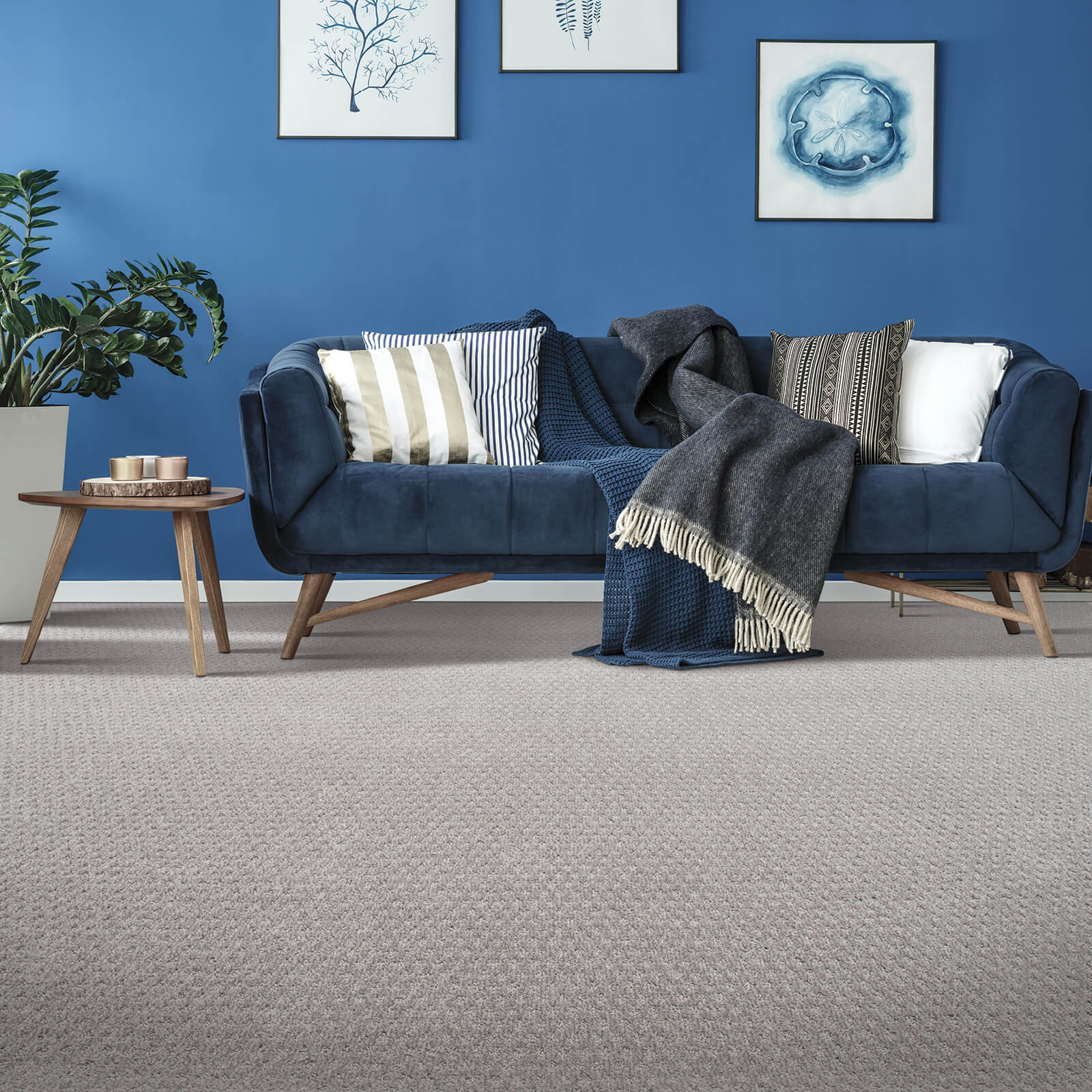 Blue colorwall | Dolphin Carpet & Tile